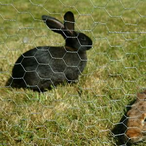 rabbit-netting