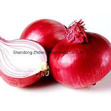 Oignon rouge frais de haute qualité