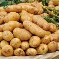 100% экспорта Бангладеш новый урожай свежего картофеля