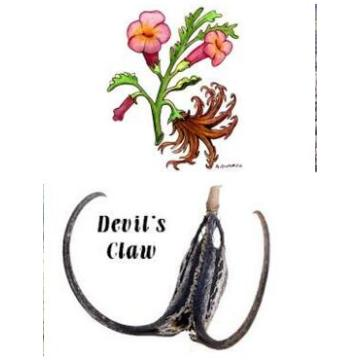 Anti-inflammatory of Devil's Claw Extract