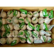 Chinese garlic 5p,250g ,10kg carton
