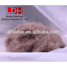 fibra de lana de cachemira de camello lavada y cardada
