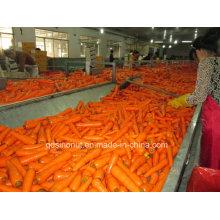 Gefrorene Karottenwürfel