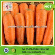 Nueva cosecha de zanahoria fresca