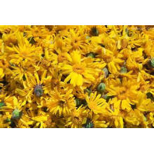 High Natural 10: 1 Arnica Extract