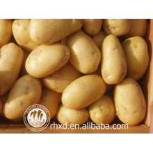 new Crop fresh potato/Fresh Round Shape and Potato Product Type potato prices