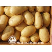 новый урожай свежего картофеля/свежие круглой формы и картофельный продукт типа картофеля цены
