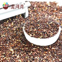 2016 nouveau millet de sorgho noir de culture (maïs balai glutineux / millet commun)