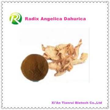 Hochwertige natürliche Pflanzenextrakt Radix Angelica Dahurica Pulver