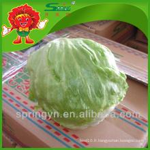 Salade de laitue hydroponique organique