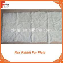 Klasse A natürliche Rex Rabbit Plate