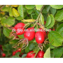 High Quality rose hips p.e.