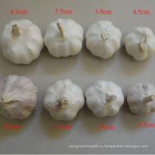 Водозабору все спецификации нормальный белый чеснок свежий в Китае