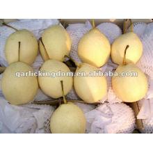 Nueva pera fresca de origen