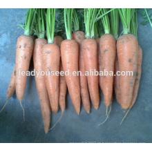 MCA01 Bacun sementes de cenoura amarelas resistentes ao calor para palnting