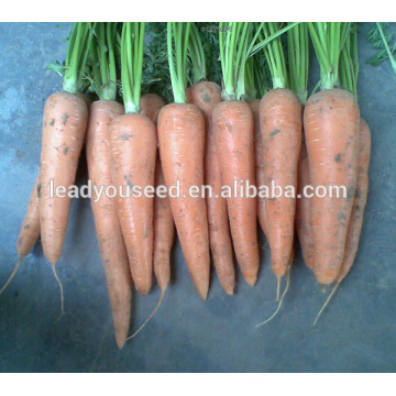 MCA01 Bacun heat resistant yellow carrot seeds for palnting