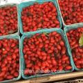 Wholesale Dried Wild Goji Berry Ningxia bulk