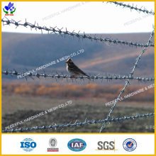 Galvanized Barbed Iron Wire (HPRW-0606)