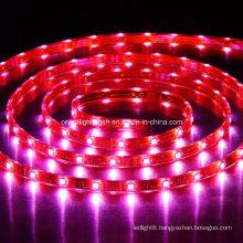LED 5060 High Power Flexible Strip 30 LEDs/M LED Light
