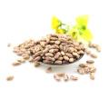 Großhandel China Light Speckled Kidney Bohnen funkeln Kidney-Bohnen