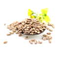 wholesale China Light Speckled Kidney beans sparkle kidney beans