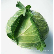 chinese fresh green round cabbages