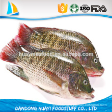 tasty competitive price top quality frozen tilapia for sale