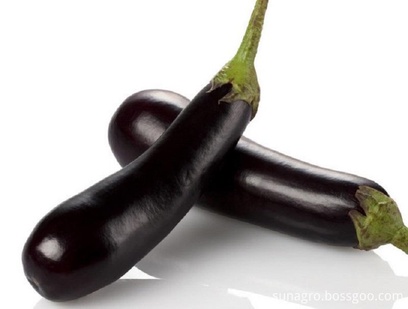 Fresh Black Eggplant
