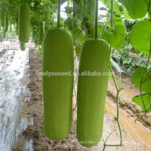BTG01 Сяньцунь средней зрелости высокая доходность бутылка семена тыквы