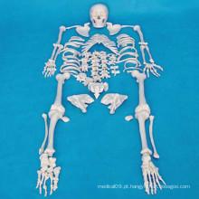 Modelo de esqueleto humano de alta qualidade para o ensino médico (R020104)