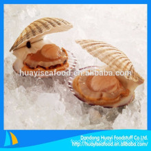 new landing frozen scallop(latin name:patinopecten yessoensis)