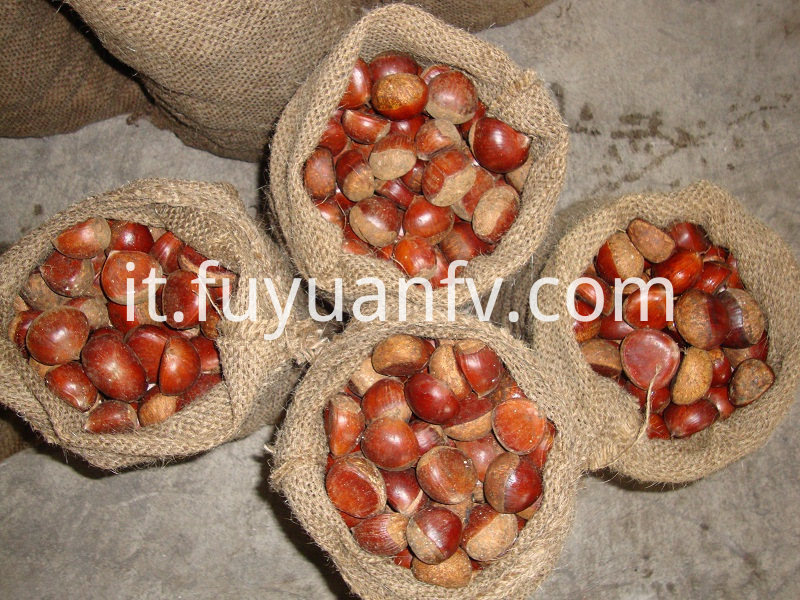 chestnut packed in jute bags