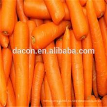 Zanahorias secas orgánicas