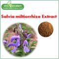 Salvia miltiorriza Ekstraktı