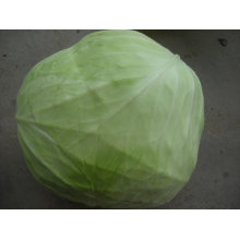 chinese fresh round cabbages