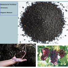 Seaweed bio Microbial base organic fertilizer with amino acid