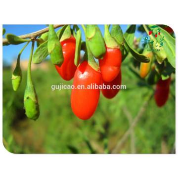 Китайский сушеные фрукты нинся Китай ягоды годжи 250/280/350/380/500/750/сушеные ягоды годжи,органические сушеные ягоды годжи