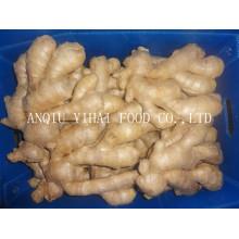 Air Dry Ginger / Globale Gap