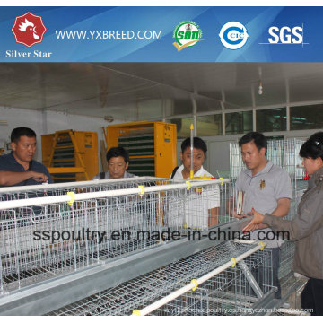 Sistema Silver Star Automatic Layer Chicken Cage