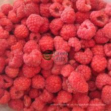2015 Nueva cosecha de frambuesa congelada IQF