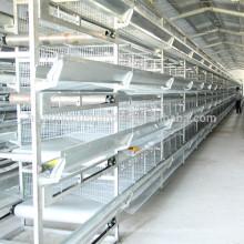 Cages de volaille spécialement conçues pour l'élevage de poulets