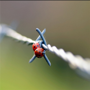 High quality low price Barbed Wire