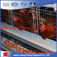 Couchettes de poulet Cage de poulet