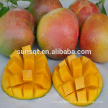 Vitamin A fruit juice mango fruit powder for making yogurt