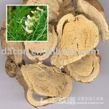 extracto de raíz de sophora 98%