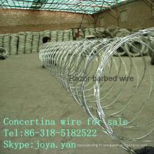 Concertina fil à vendre