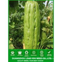 JBG02 китайские синтетические семян горькие семена тыквы, горькие тыквы гибридные семена