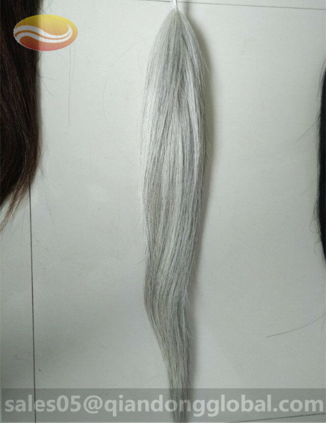 white False Horse Tail