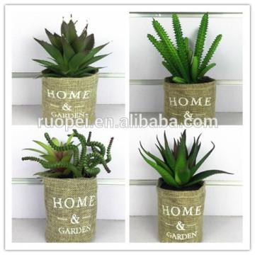 mini succulent plants / home decorative plastic mini cactus