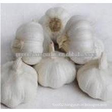 healthy white garlic